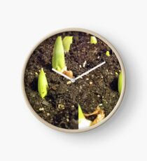 Spring bulbs sprouting Clock