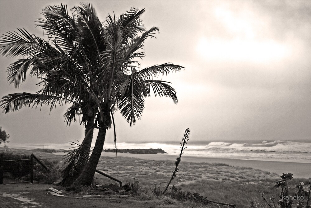 Lonely Palms by kaneko