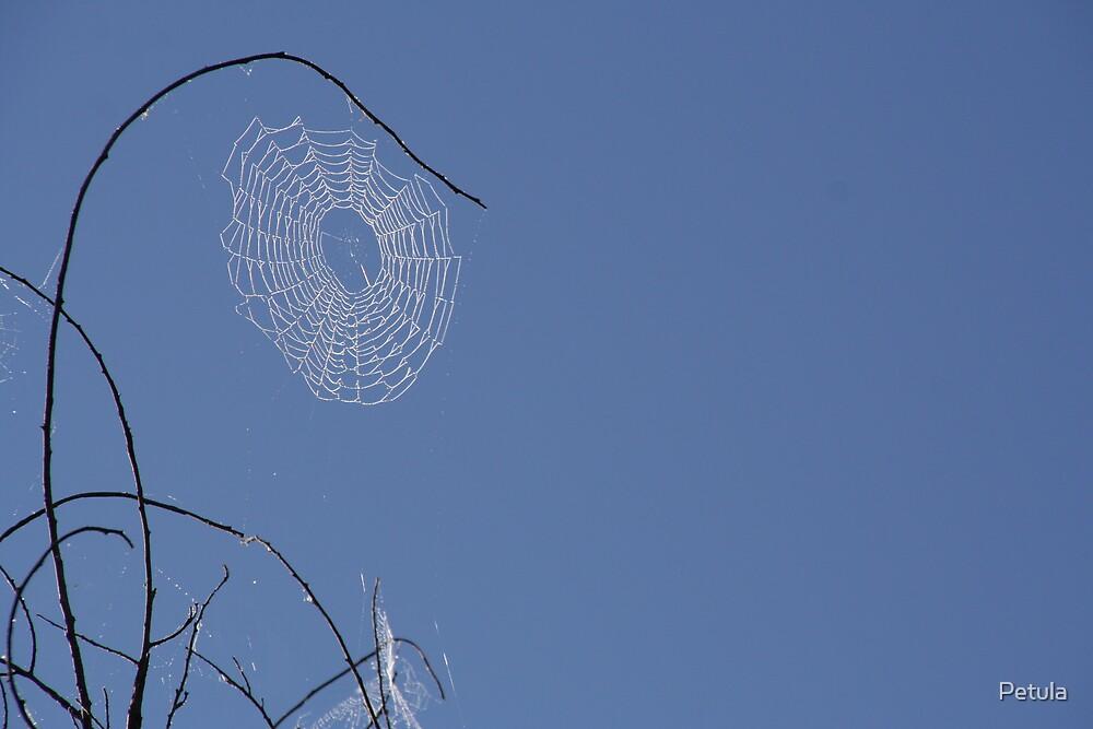 web by Petula
