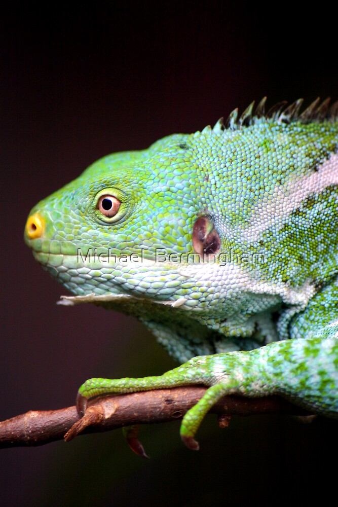 It aint easy being Green by Michael  Bermingham