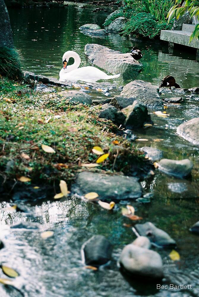 swan by Bec Bartlett