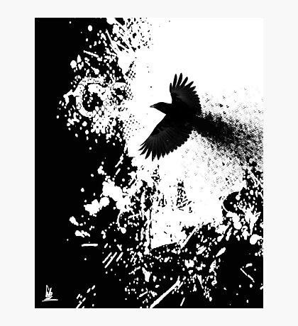 crow flight Photographic Print