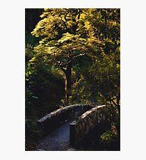 Bridge over Avalanche Creek Photographic Print