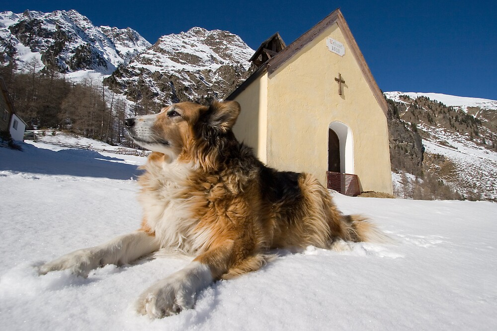 Tyrolean watchdog by GreenA