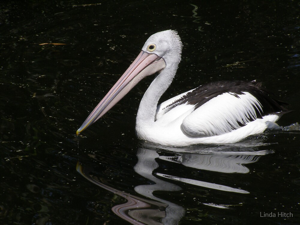 Pelican by Linda Hitch