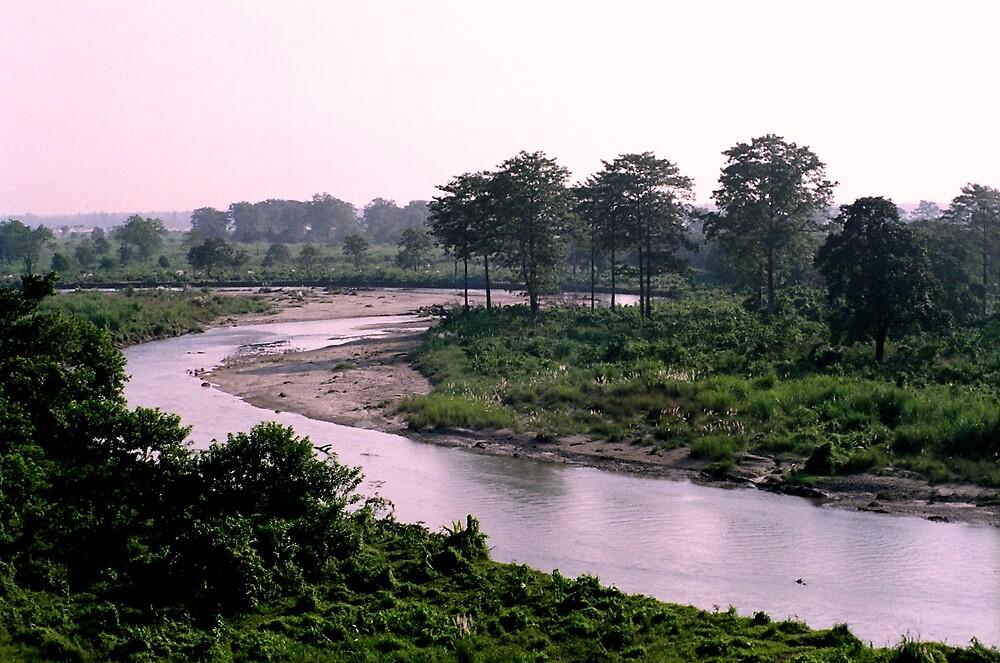 The Gorumara forest by Joydeep