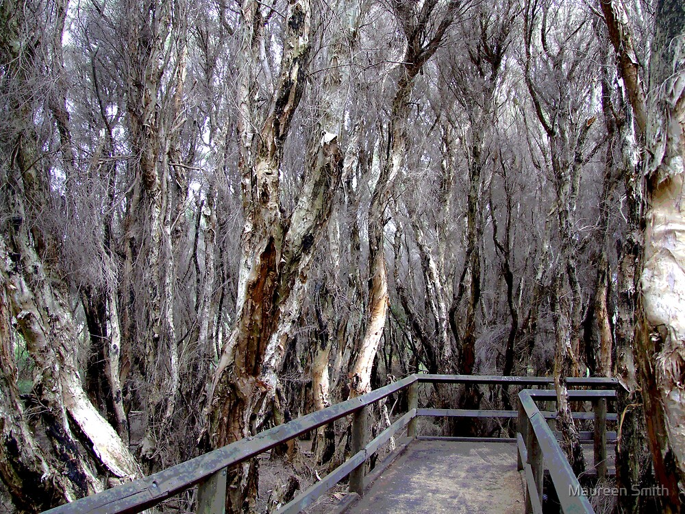 Paperbarks at Bunbury Swamp by Maureen Smith