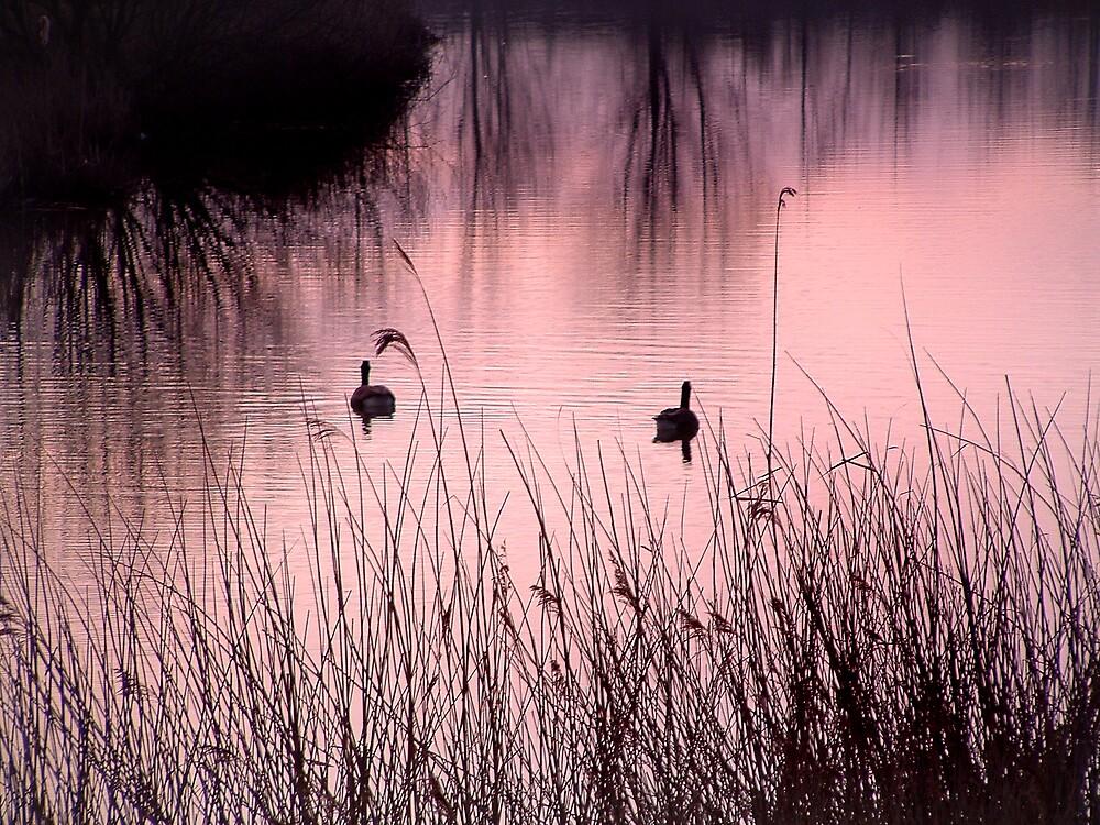 Dawns calm by Moth