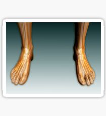 Conceptual image of human legs and feet with nervous system. Sticker