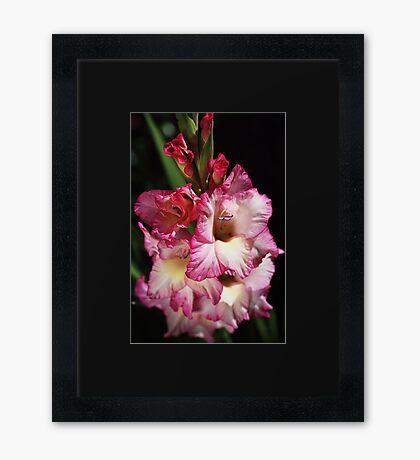 Gladiolus For You Framed Print
