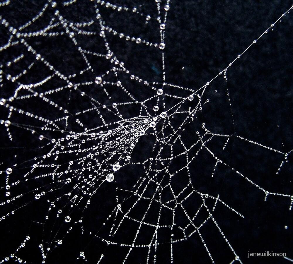 Spiders Web by janewilkinson