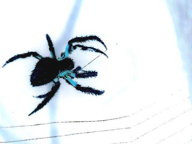 blue spider by yellowcar9