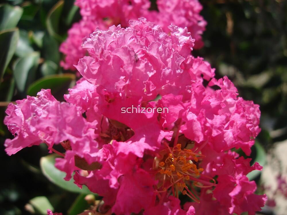 beamer pink by schizoren
