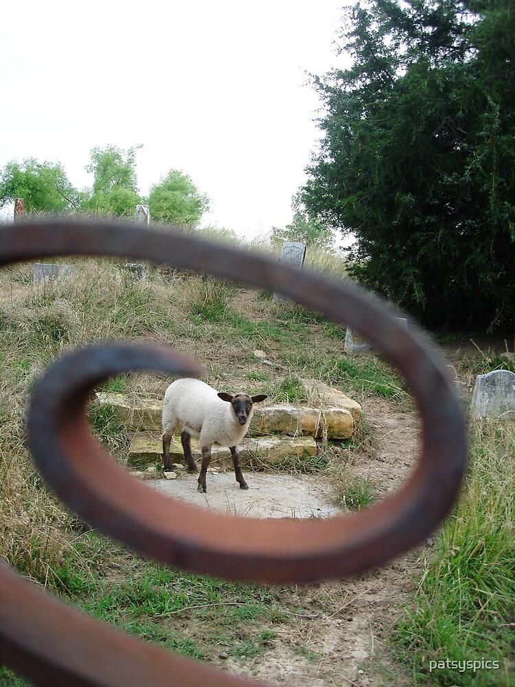 Lamb by patsyspics