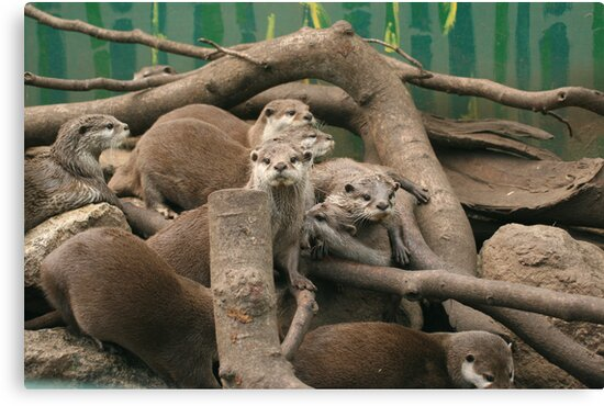 Otters at play by Andyjloft