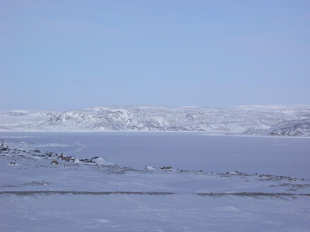 Arctic by jeliel1