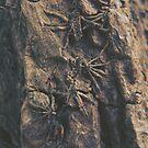 « Parasite » par mllethorgard