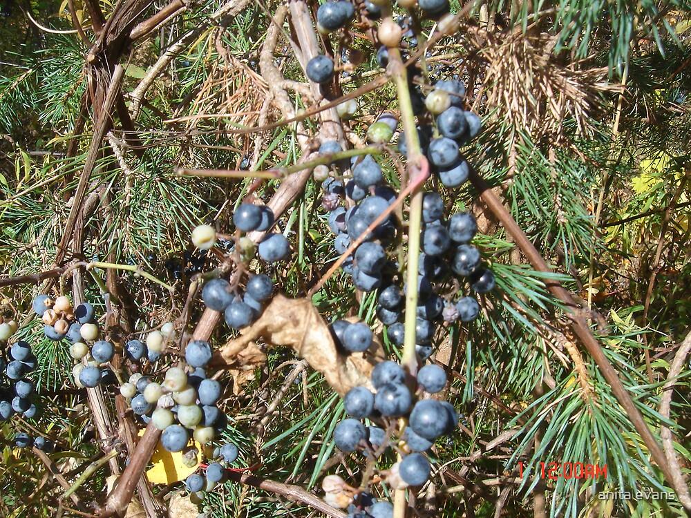 WILD GRAPES by anita evans