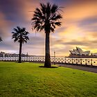 Opera House and Palm Trees by Arfan Habib