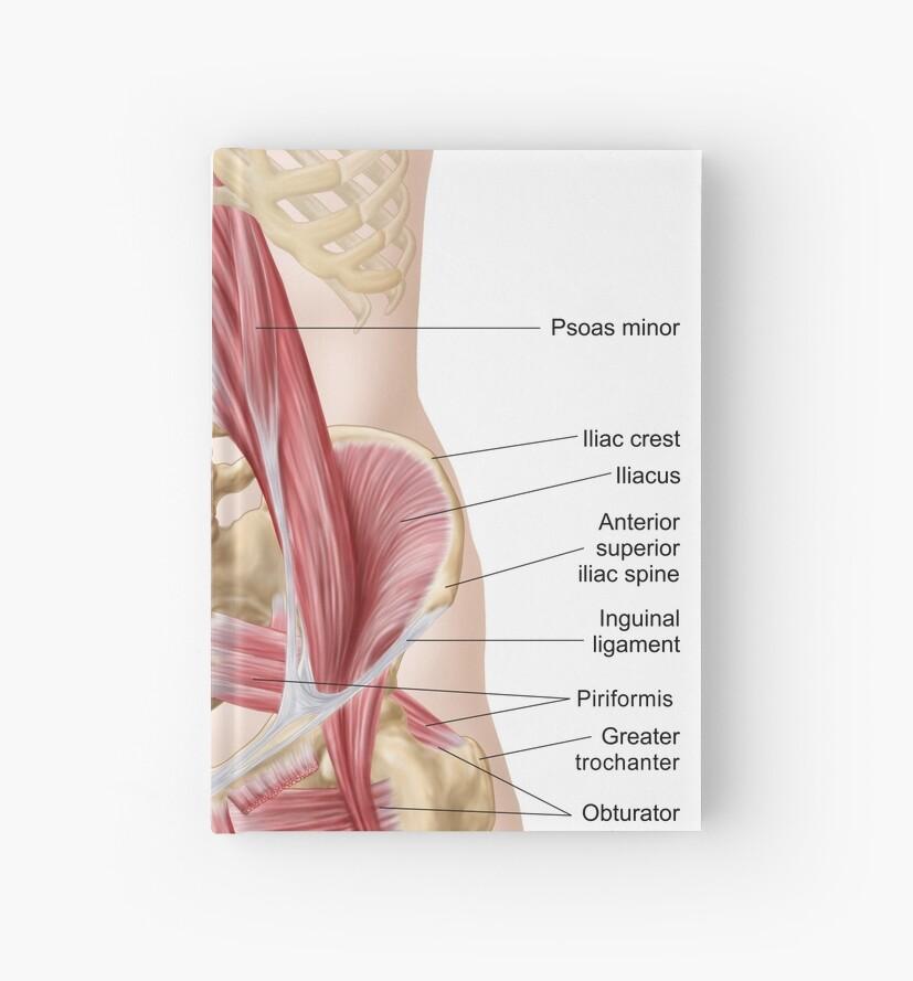 Cuadernos de tapa dura «Anatomía de iliopsoa, también conocida como ...