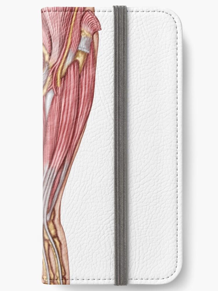 Fundas tarjetero para iPhone «Anatomía de los músculos humanos del ...