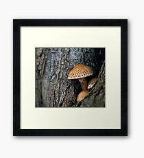Toadstool in the rainy woods Framed Print
