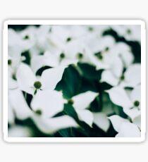 White elegant floral Sticker