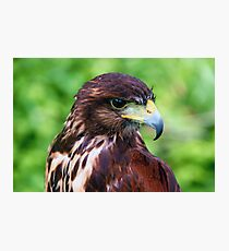 Falcons Eye Photographic Print