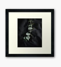 Night garden vine Framed Print