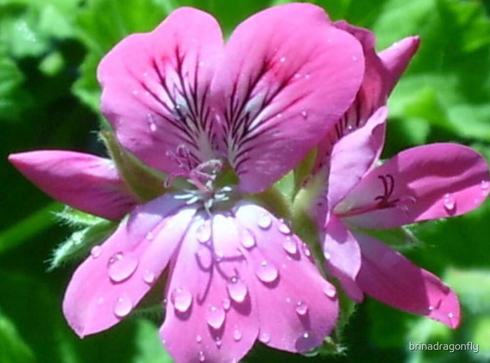Dew Drops by brinadragonfly