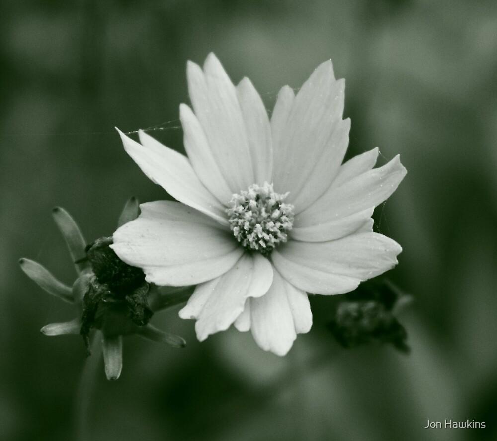 Dying Flower by Jon Hawkins