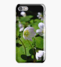Wood sorrel iPhone Case/Skin