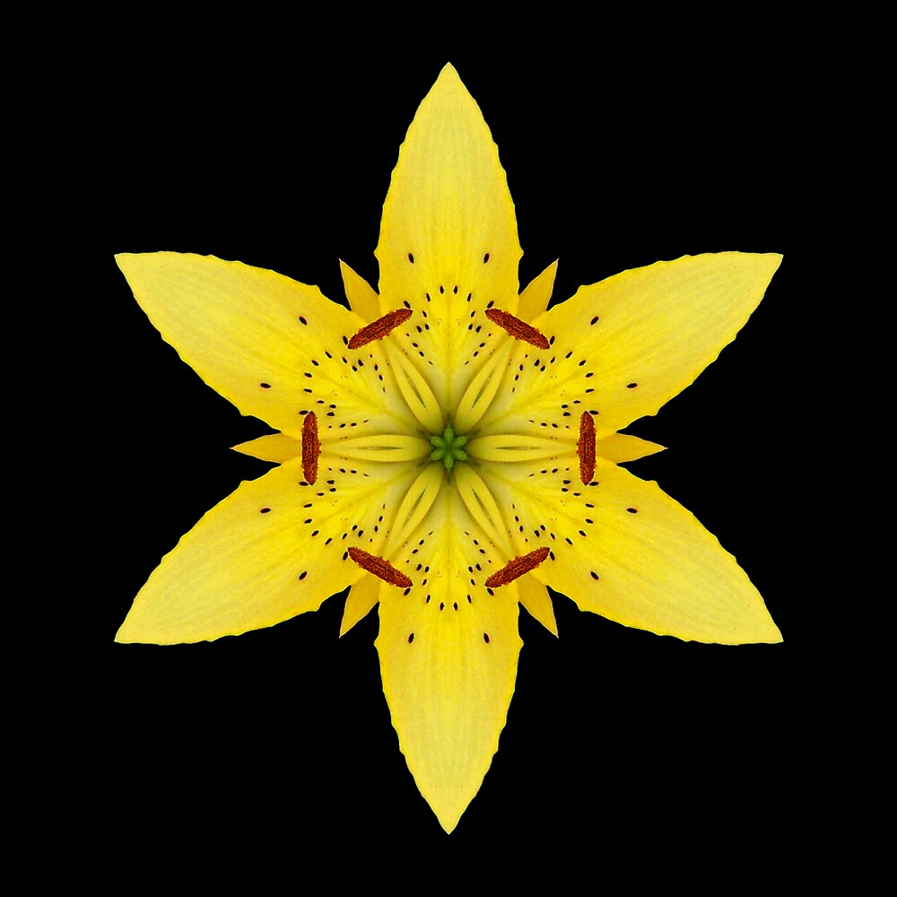 Yellow Lily by David Bookbinder