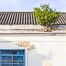 Plant on the roof by trarbach