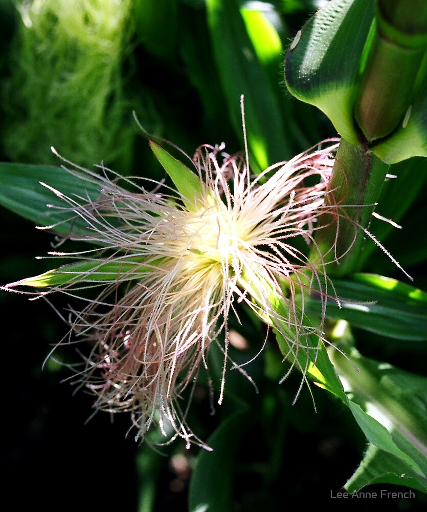 Corn Silk by Lee Anne French