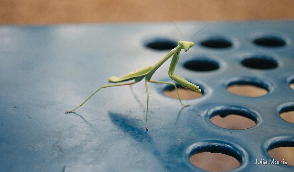 The Praying Mantis Stare by Julia Morris