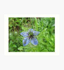 Flower Bug Art Print