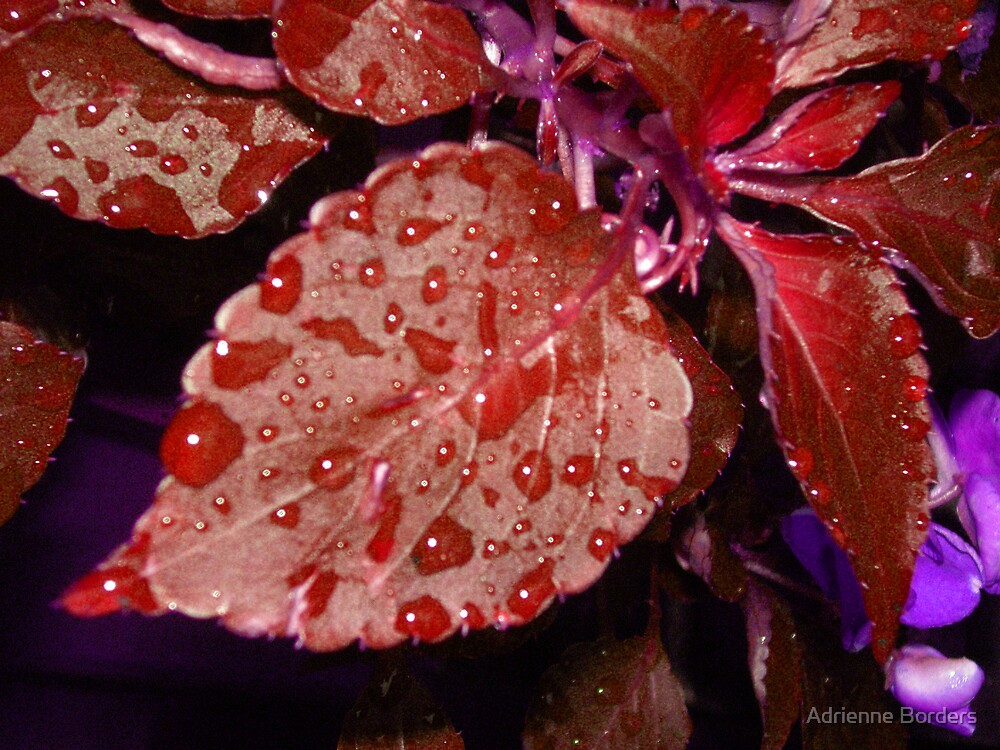 Red Leaf by Adrienne Borders
