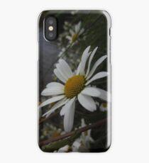 Ox-eye daisy iPhone Case/Skin