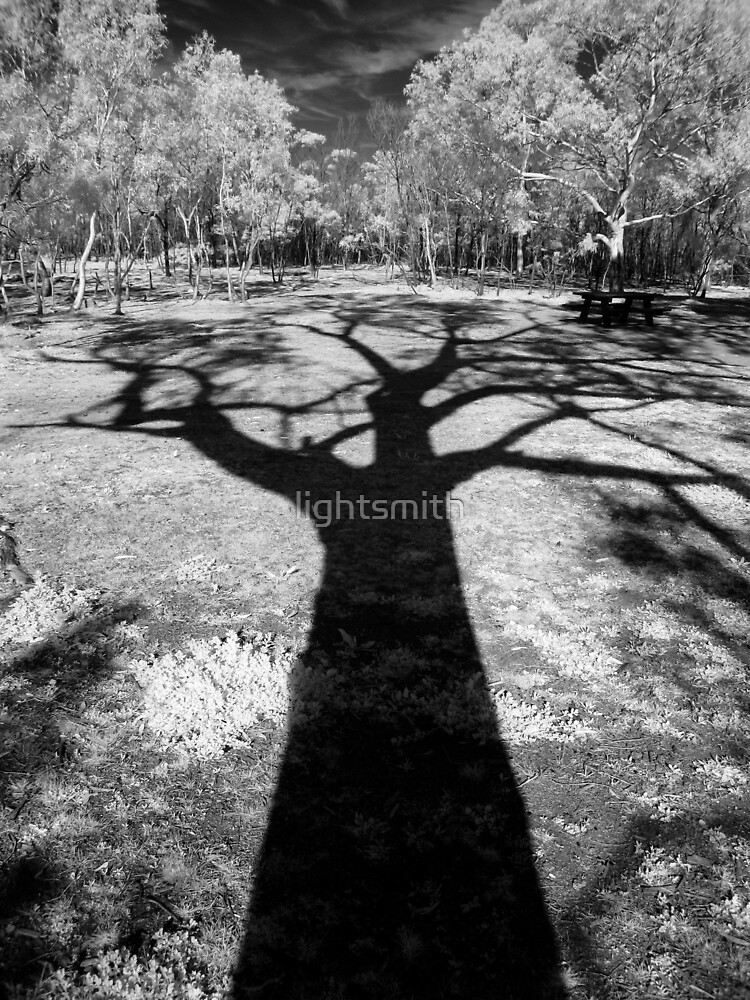 Shadow Tree Two by lightsmith