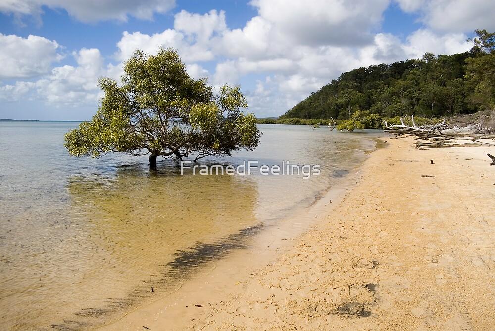 Mangrove in the sea by FramedFeelings
