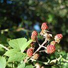 Berries by gingerbird