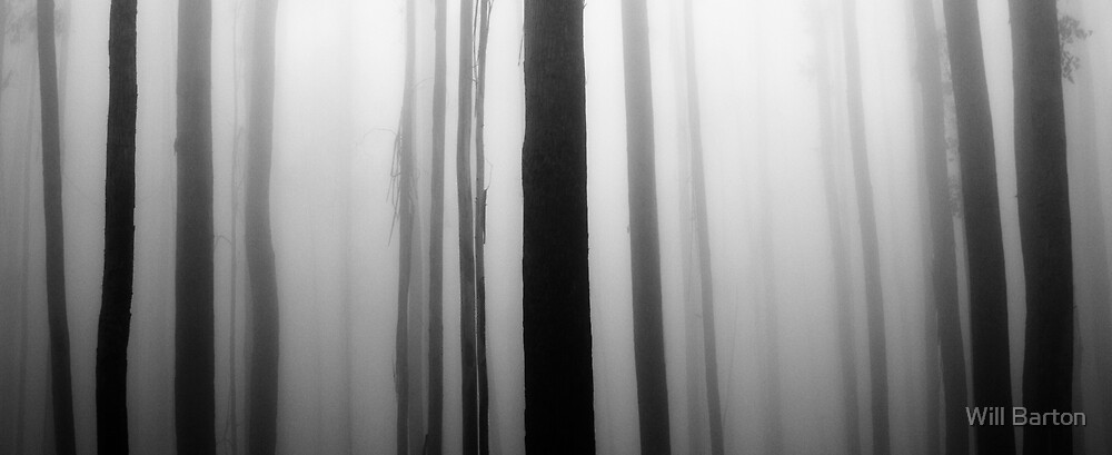 Trunks in the Mist by Will Barton