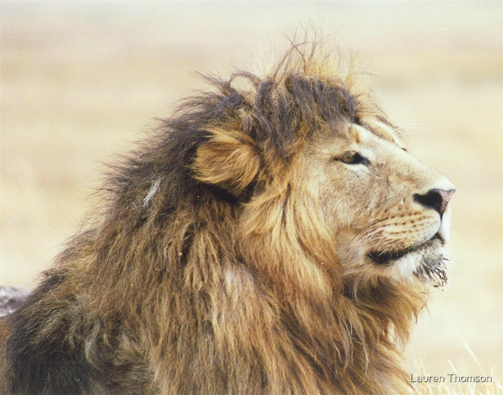 I know I am handsome...you don't need to tell me by Lauren Thomson