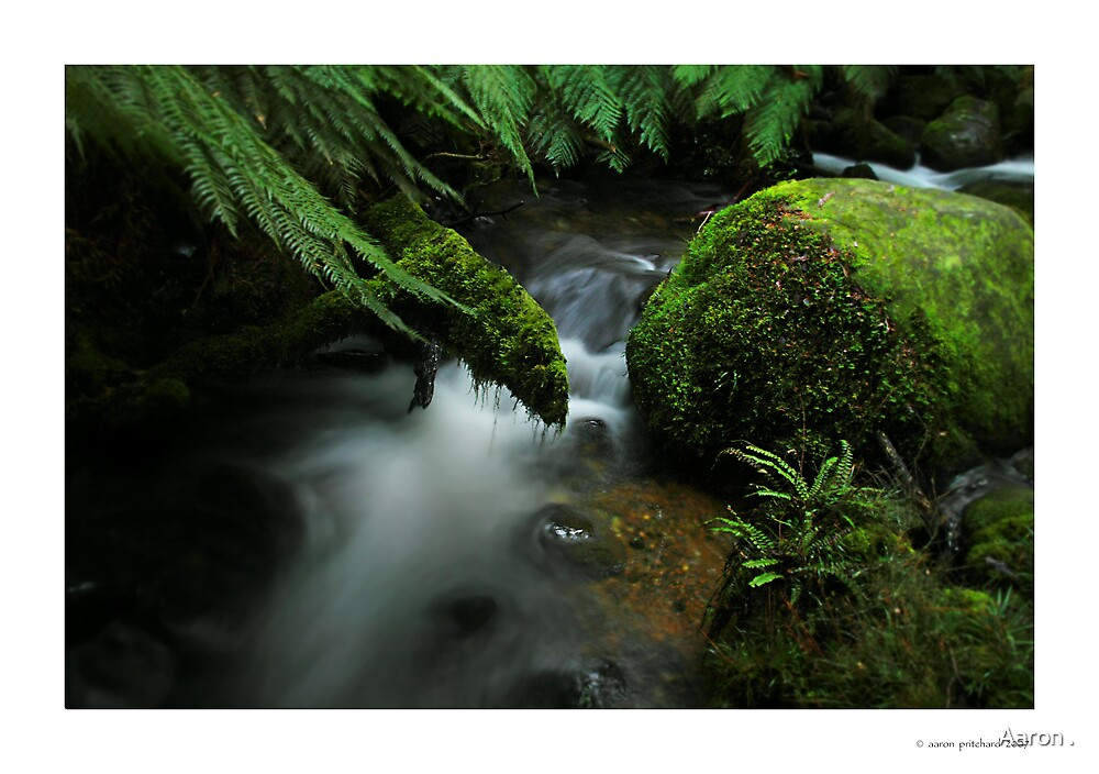 7am - Cement Creek, Mt Donna Buang by Aaron .
