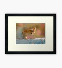 Cute Funny Drolly Ginger Cat Kitten Framed Print