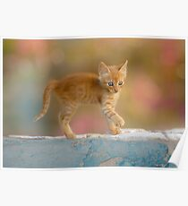 Cute Funny Drolly Ginger Cat Kitten Poster
