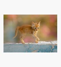 Cute Funny Drolly Ginger Cat Kitten Photographic Print