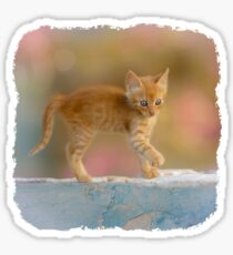 Cute Funny Drolly Ginger Cat Kitten Sticker