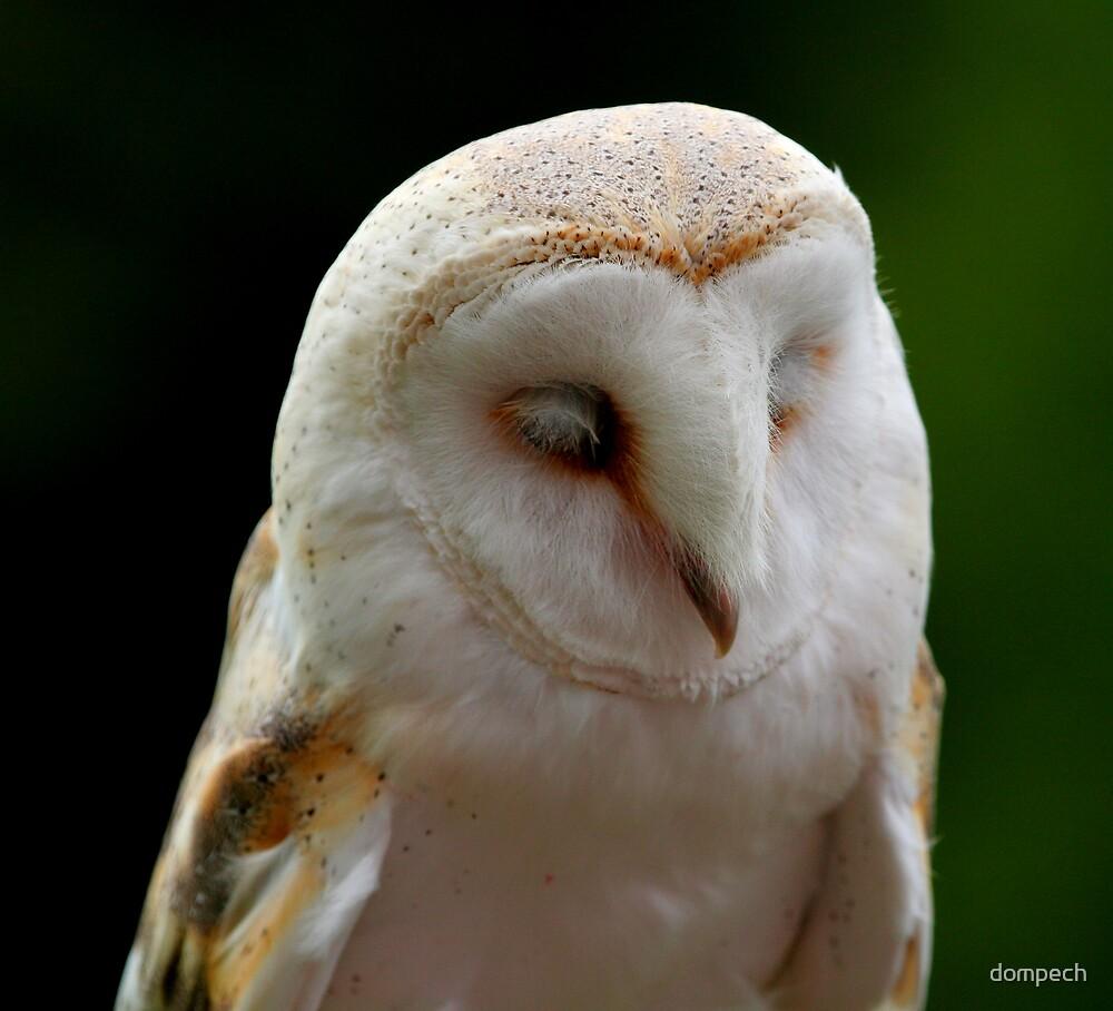 Barn owl by dompech